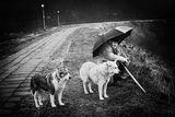 В дъжда.... ; comments:85