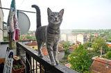 Смелото Котенце ; comments:4