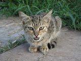 Коте ; comments:1