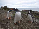 Papua penguins ; Comments:12