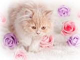Мацка с рози :) ; comments:3
