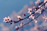 Springtime ; comments:20