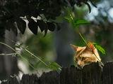 Ловец ... или крадец? ; comments:32