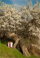 Пролет ; comments:18