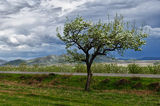 пролетно ; Comments:13