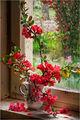 Усмивката на стария прозорец ; comments:30