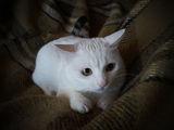 Cat hunter ; comments:2
