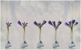 Синя пролет ; comments:60