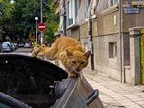 Разкарай се от моята кофа!!!! ; comments:14