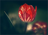 докосвам пролетта.. ; comments:33