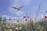 пролетен пейзаж ; comments:24