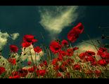 Пролет в червено ; comments:34