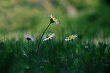 сред тревите ; comments:21