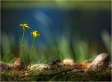 Пролетна умора ; comments:87