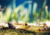 Пролетна умора 3 ; comments:43