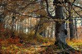 В гората ; comments:9