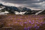 пролет в Централен Балкан ; comments:70
