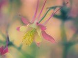 мечтание в розово.. ; comments:51