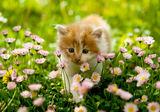 Коте в тревата ; comments:31
