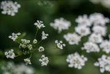 ...танцът на по-малкото цветче! ; comments:46