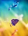 Цветни сънища... ; comments:41