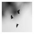 ... Въздушни целувки  ... ; comments:56