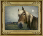 Лунен пейзаж с кон ; comments:47