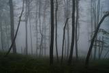 Сред мъгли и горски тайни ; comments:7