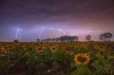 Искам буря ... сега ; comments:53