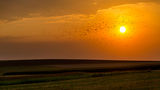 топлината на залязващото слънце ; comments:33