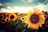 sun ; comments:12
