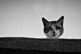 За котешкото любопитство ; comments:41