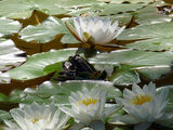 no name ( ID=1633503 ) ; comments:4