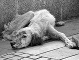 Кучешки живот ; comments:4
