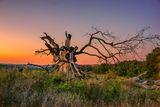 Старото дърво ; comments:27