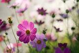 Цветя ; comments:25