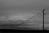 есенни птици ; comments:44
