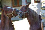 Усмихни се, снима ни едно магаре ! ; comments:8