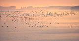 Нашествие по изгрев...Дунав ; comments:41