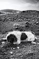 Пазачът на стадото ; comments:87