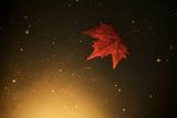 Space autumn ; comments:15