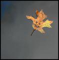 Весела и цветна есен на всички! ; Comments:19