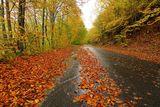Есента ; Comments:7