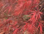 Червена Есен ; comments:25
