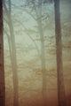 Мъгливи мисли по вертикала... ; Comments:18