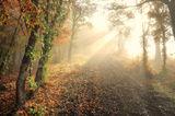 Път в гората ; comments:43