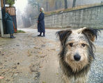 Една ранна утрин в Родопите... ; comments:105