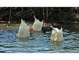 Синхронно плуване  :) ; comments:23