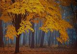 Есенни мъгливости ; comments:40