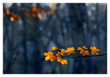 November... ; comments:47